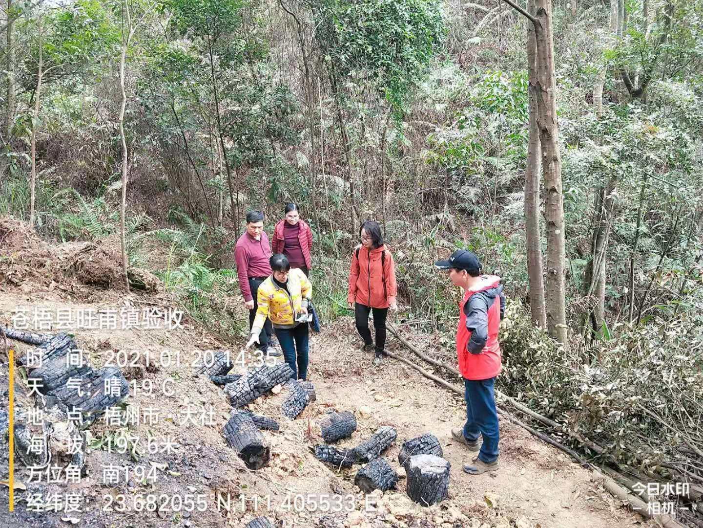苍梧县2020年4标段清理松材线虫病  枯死松树验收通过