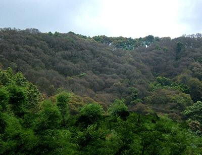 天鹰林业病虫害、测报、防治