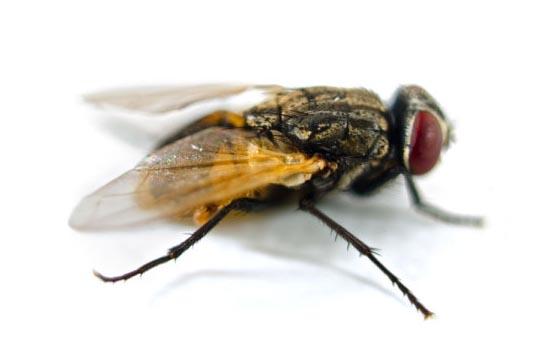 苍蝇防治-天鹰