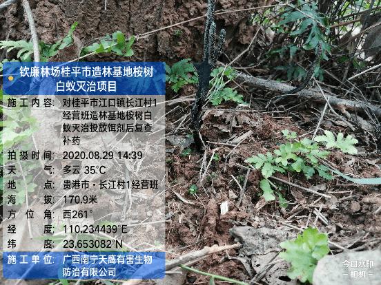 桉树与甘蔗的白蚁防治方法